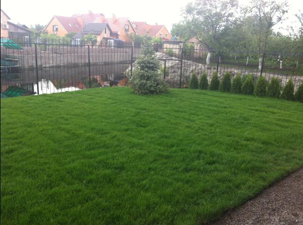 Устройство посевного газона и ландшафтный дизайн (готово)
