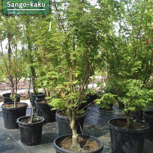 Sango-kaku
